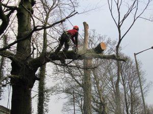 Spilovanie a výrub stromov